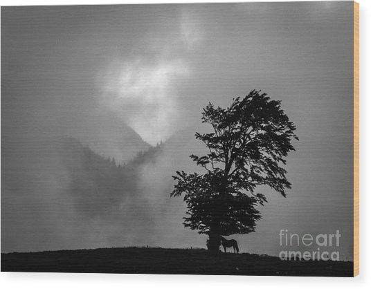 Cloud Kingdom Wood Print by Vlad Dobrescu