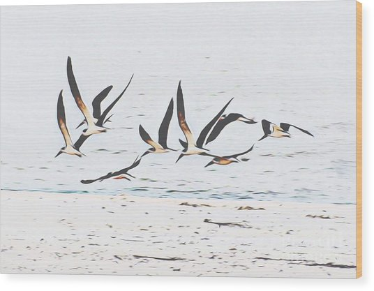 Coastal Skimmers Wood Print