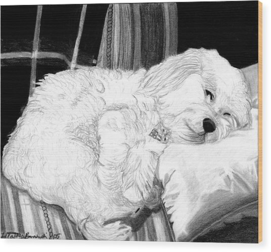 Cockapoo Dog Portrait   Wood Print by Olde Time  Mercantile