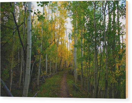 Colorado Fall Hike Wood Print