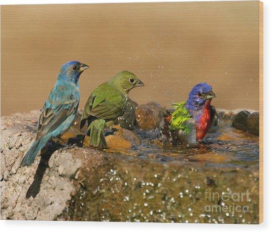 Colorful Bathtime Wood Print