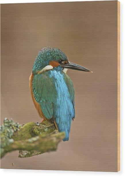 Common Kingfisher Wood Print