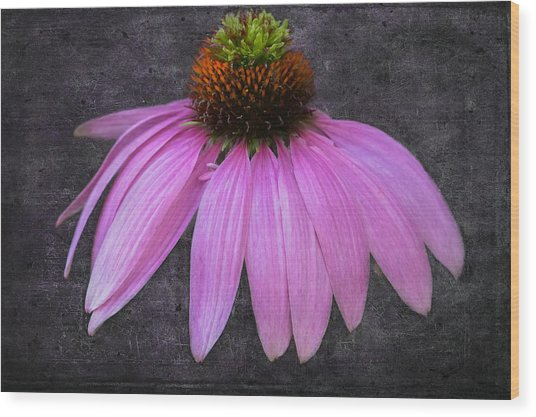 Wood Print featuring the photograph Cone Flower by Garvin Hunter