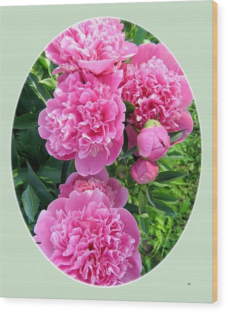 Country Peonies Wood Print