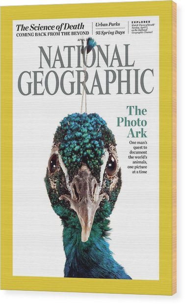 Cover Of The April National Geographic Wood Print