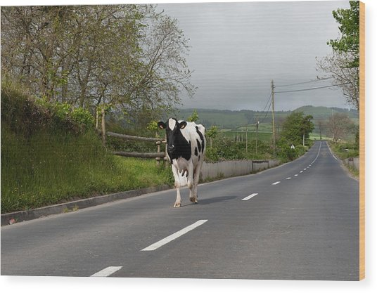 Cow Walks Along Country Road Wood Print