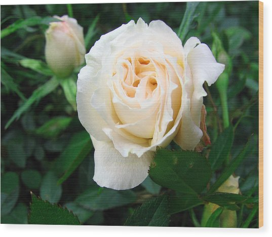 Cream Pot Rose Wood Print