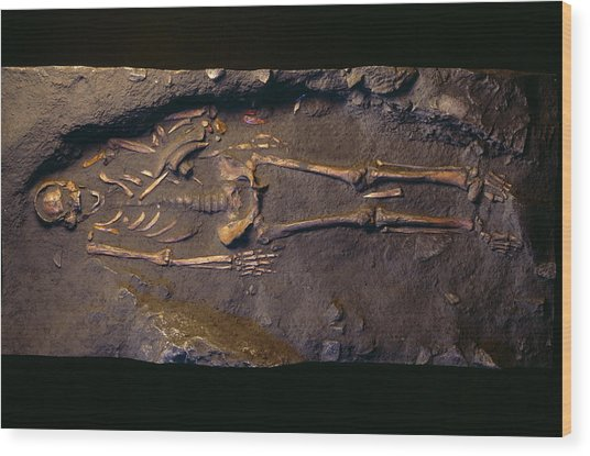 Cro-magnon Man Fossil Wood Print by Pascal Goetgheluck/science Photo Library