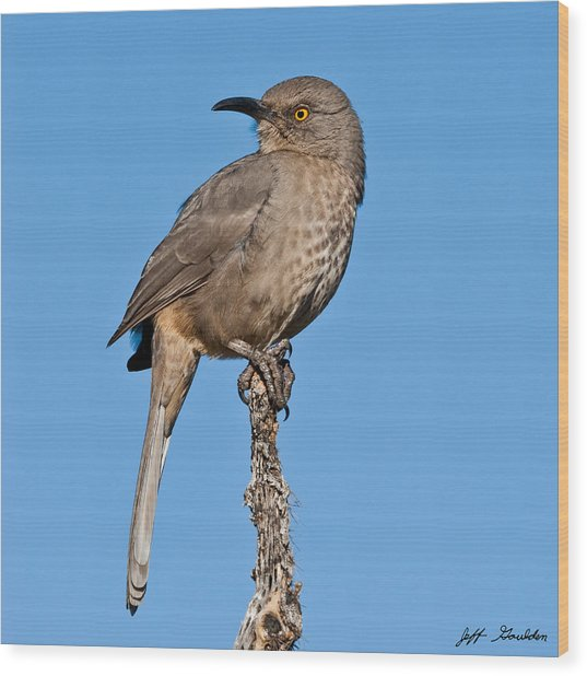 Curve-billed Thrasher Wood Print