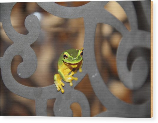 Wood Print featuring the photograph Dainty Tree Frog by Debbie Cundy