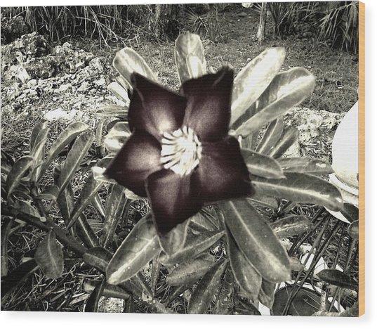 Dark Wood Print by Chasity Johnson