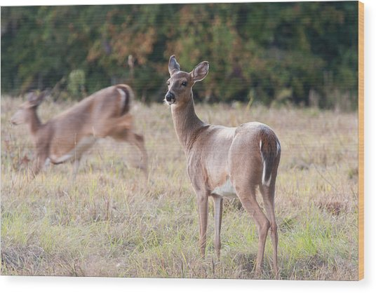 Deer At Paynes Prairie Wood Print
