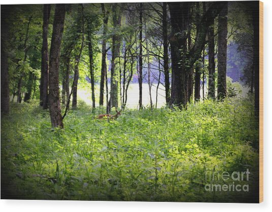 The Deer In A Secret Glade Cades Cove Wood Print