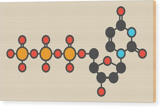 Deoxycytidine Molecule Wood Print by Molekuul