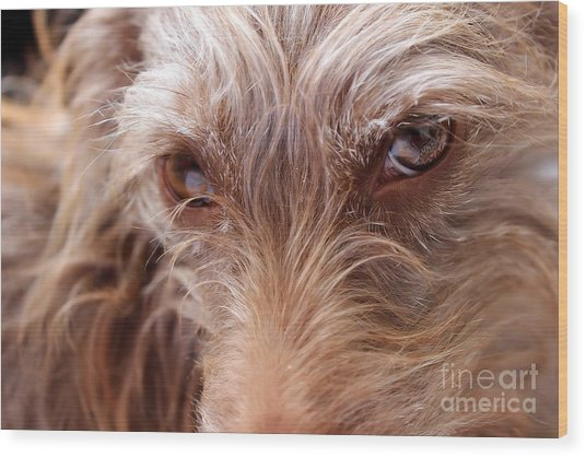 Dog Stare Wood Print
