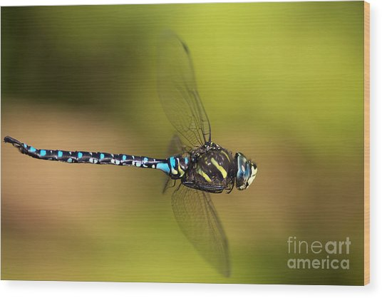 Dragonfly Wood Print by Sharon Talson