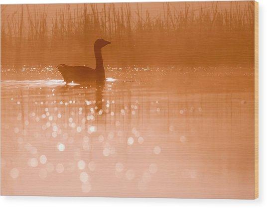 Early Morning Magic Wood Print