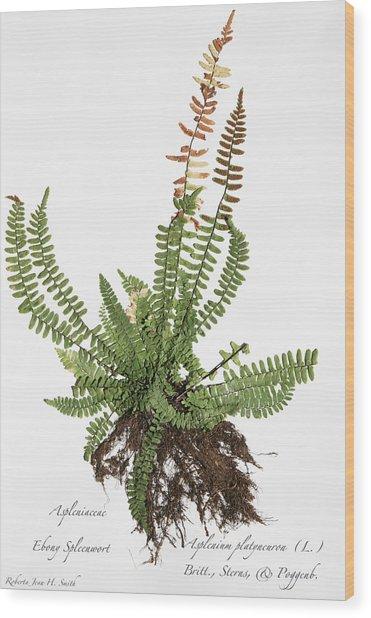 Ebony Spleenwort Wood Print