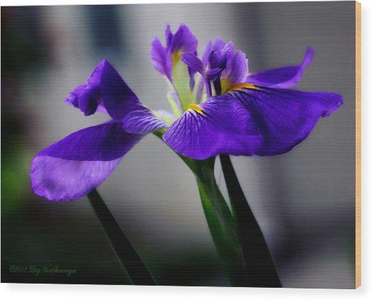 Elegant Iris Wood Print
