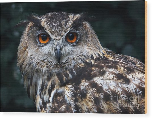 European Eagle Owl Wood Print