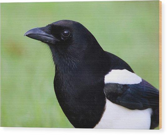 European Magpie Wood Print