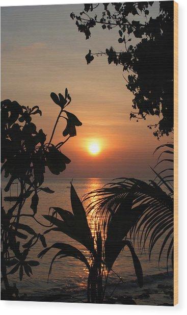 Evening Sun Wood Print