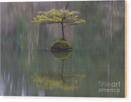Fairy Lake Fir Wood Print