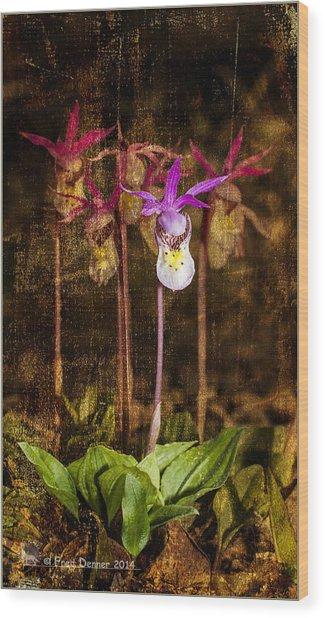Fairy Slippers Wood Print