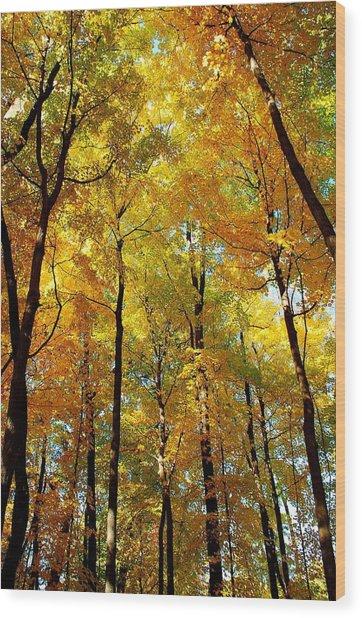 Fall Wood Print by F Salem