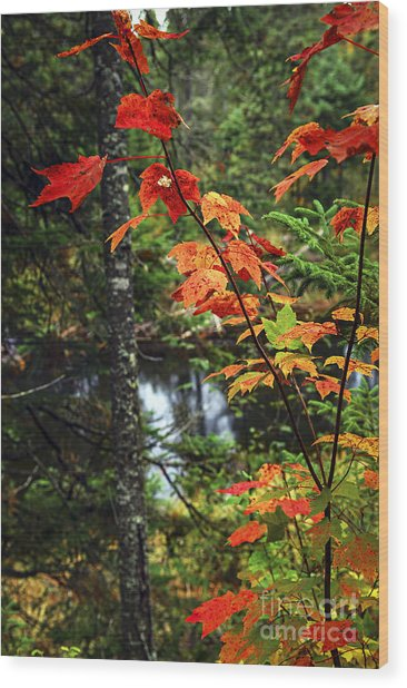 Fall Forest And River Wood Print
