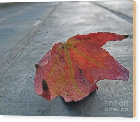 Fall Leaf Wood Print