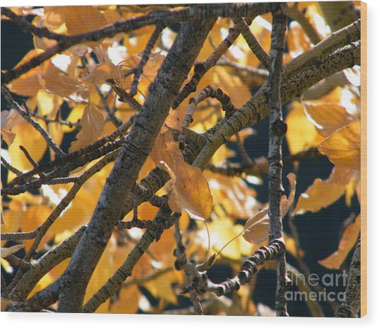 Wood Print featuring the photograph Fall Leaves by Ann E Robson