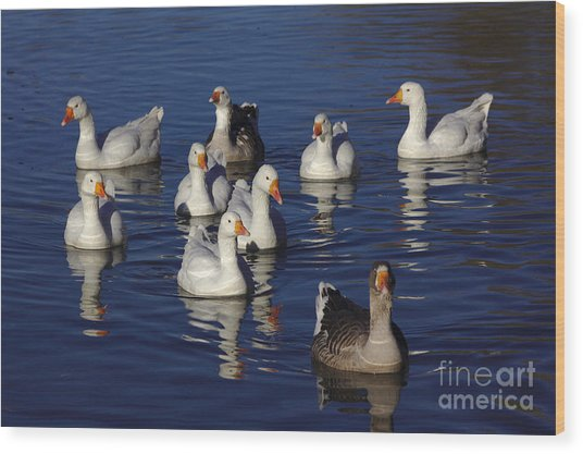 Family Goose Wood Print