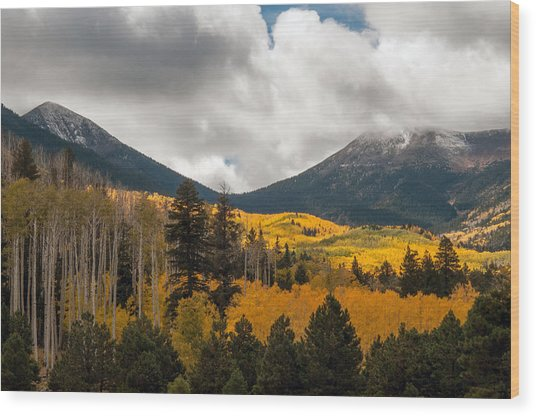Flagstaff Fall Color Wood Print