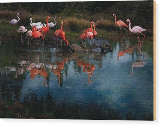 Flamingo Convention Wood Print