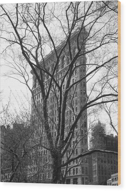 Flat Iron Tree Wood Print