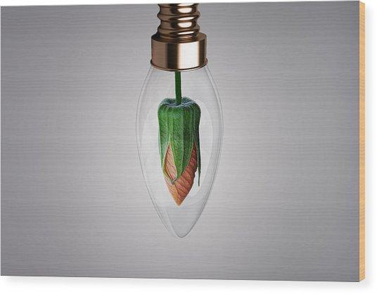 Flower In Bulb Wood Print
