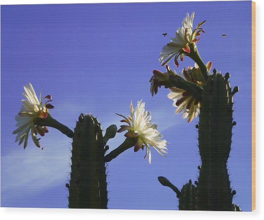 Flowering Cactus 4 Wood Print