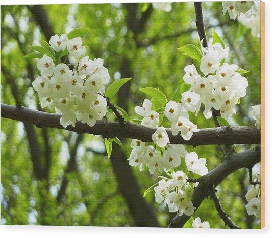 Flowers In The Spring Wood Print