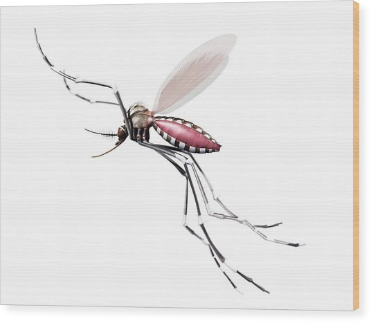 Flying Mosquito Wood Print by Sciepro/science Photo Library