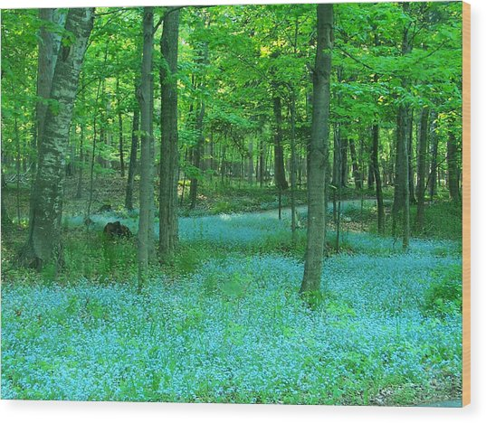 Forget-me-nots In Peninsula State Park Wood Print