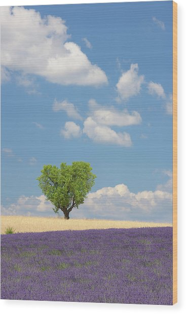 France, View Of Lavender Field With Tree Wood Print by Westend61