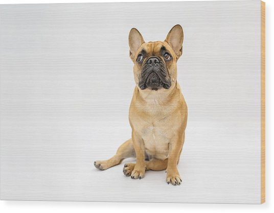 French Bulldog Wood Print by Mrs