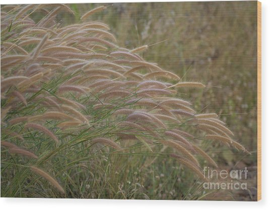 Grass Together In A Group Wood Print