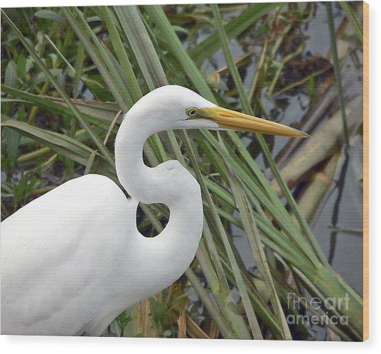 Great Egret Close Up Wood Print