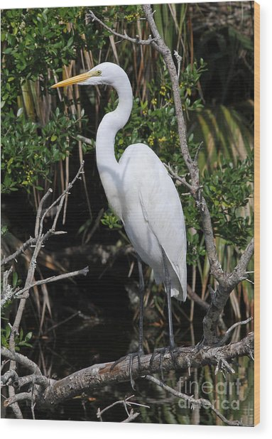 Great Egret Perched In Fallen Tree Wood Print