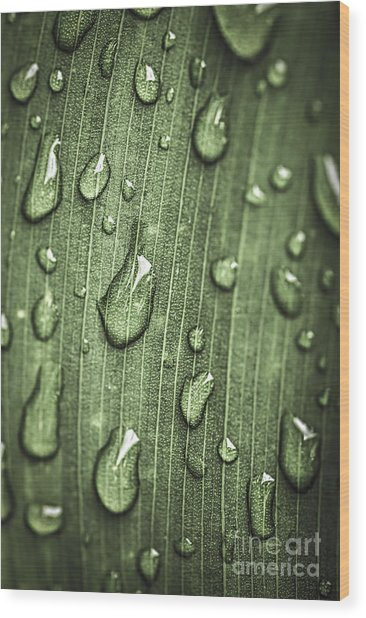 Green Leaf Abstract With Raindrops Wood Print