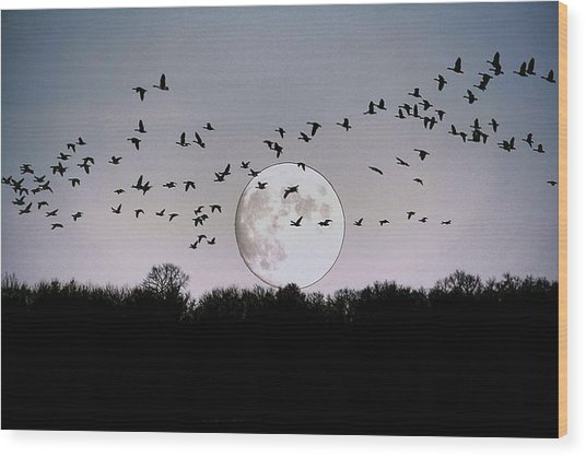 Guided By The Moon Wood Print