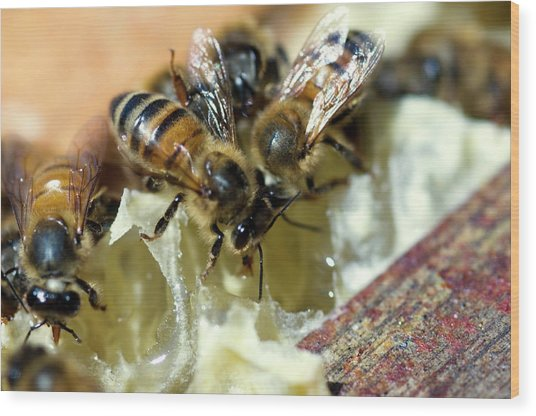 Honeybees Wood Print