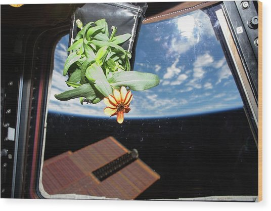 Horticulture Experiment On The Iss Wood Print